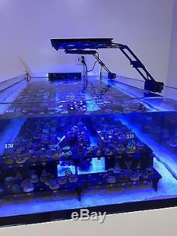 4 x MAXSPECT ETHEREAL 130W LED AQUARIUM LIGHT One MASTER WITH CONTROLLER ICV6